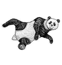 Soaring giant panda a wild cute animal falls down vector
