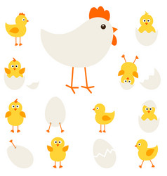 Chickens with hen vector