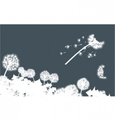 dandelions in dark vector image