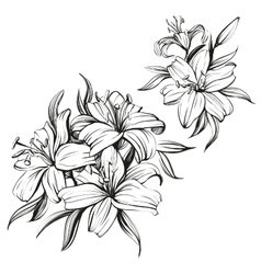 Floral blooming lilies set hand drawn vector