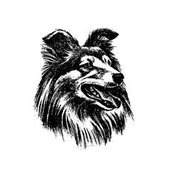 hand drawn dog collie vintage vector image