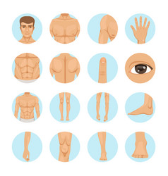 Human different parts of man body vector