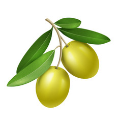 realistic olive branch with two green vector image