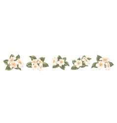 Set different plumeria flowers on white vector