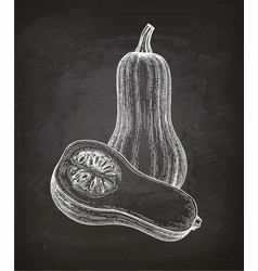 Chalk sketch of butternut squash vector