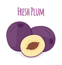 purple plum cartoon style vector image vector image