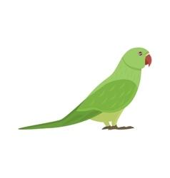 Cartoon parrot isolated bird vector image