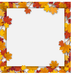 white blank with autumn maple leaves vector image