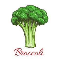 Broccoli leafy cabbage vegetable vector