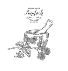 Burdock branch hand drawn medical plant vector