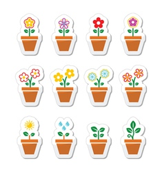 Flower plant in pot icons set vector image