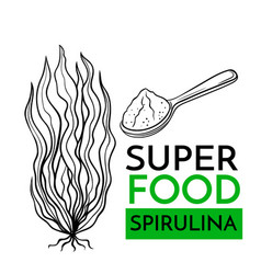icon superfood spirulina vector image
