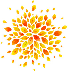 orange autumn leaves round splash isolated vector image