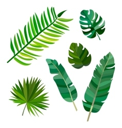 Set of palm leaves on white background vector