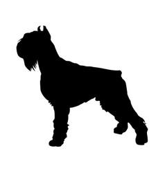 Shnauzer dog silhouette vector