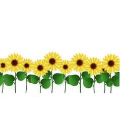 Sunflowers border seamless blooming sunflowers vector
