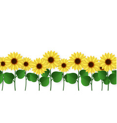 Sunflowers border seamless blooming vector