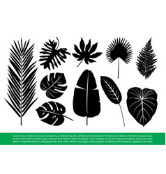 Tropical leaves vector