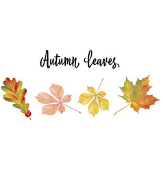 with different autumn leaves vector image