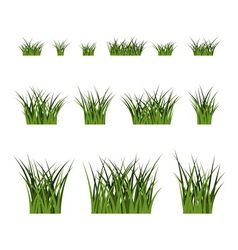 Green grass bushes set plant isolated vector image