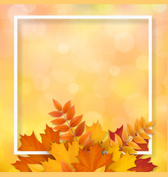 frame autumn fallen leaves vector image