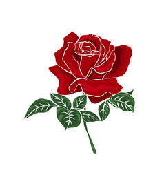 Single red rose vector