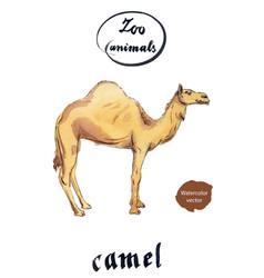 arabian dromedary camel vector image