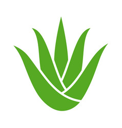 Green aloe vera plant with leaves icon vector