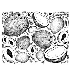 Hand drawn background of mamey sapote and coconut vector