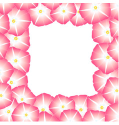 Pink morning glory flower border vector