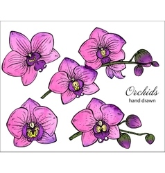 set of hand drawn orchid branches with vector image