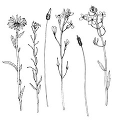 Set of ink drawing herbs and flowers vector