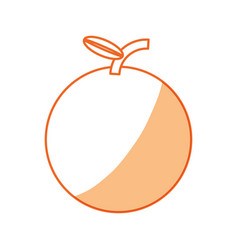 sweet orange fruit vector image