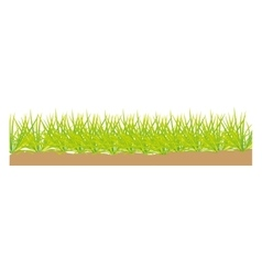 Grass terrain field isolated icon vector