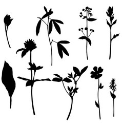 Set of herbs and flowers silhouettes vector