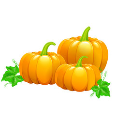 three beautiful ripe pumpkins vector image