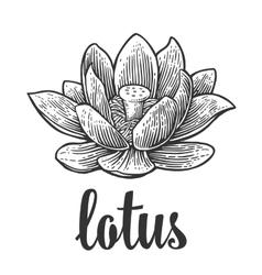Lotus flower black engraving vintage vector image vector image