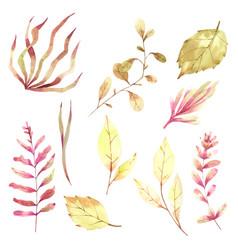 Autumn leaf elements hand paint watercolour vector