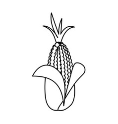 Fresh corn vegetable vector