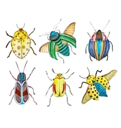 Watercolor beetles vector