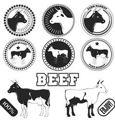 Set of premium beef labels badges and design vector image
