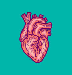 Anatomical heart icon hand drawn style vector