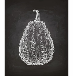 Chalk sketch of gourd vector