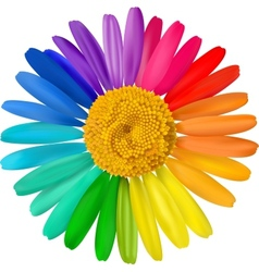 Colorful daisy vector