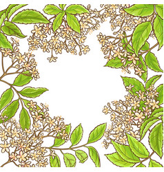 elderberry branch frame vector image