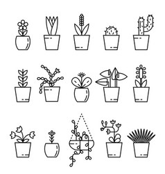 set of house plant isolated vector image