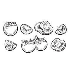 Tomato and slice vegetables sketch vector