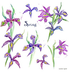 spring flowers collection watercolor purple iris vector image