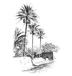 Date tree vintage vector