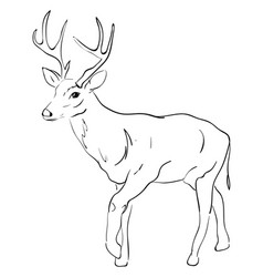 deer drawing on white background vector image